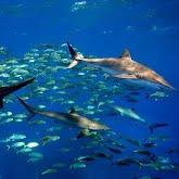 Cuban underwater paradise Queen gardens