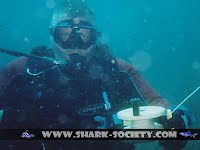 Aliwal Shoal guided scuba diving with sharks