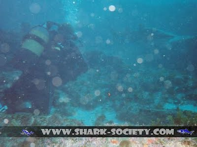 Aliwal Shark Dive