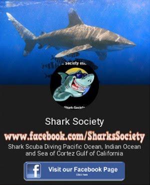 Shark Society - Hai Society